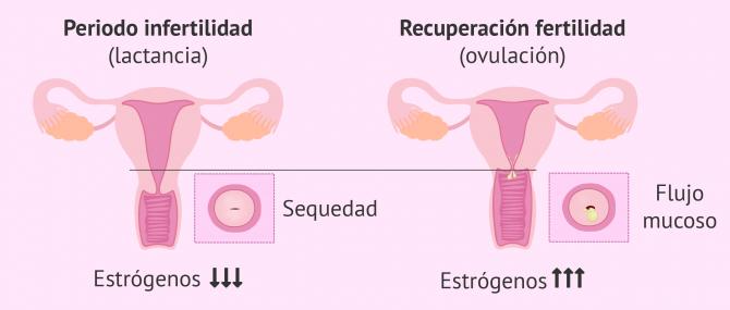 Imagen: Síntomas de fertilidad tras el parto