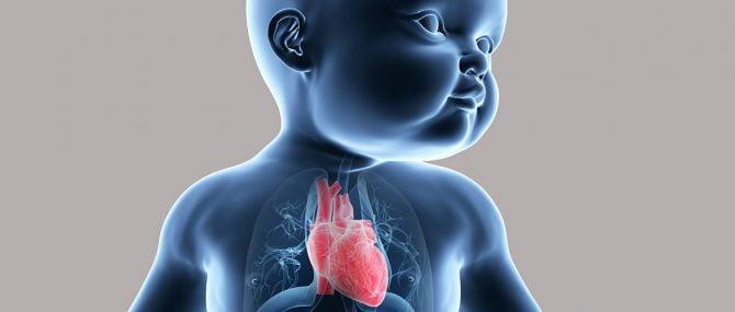 Imagen: Tabaco y sobrepeso afectan al corazón del bebé