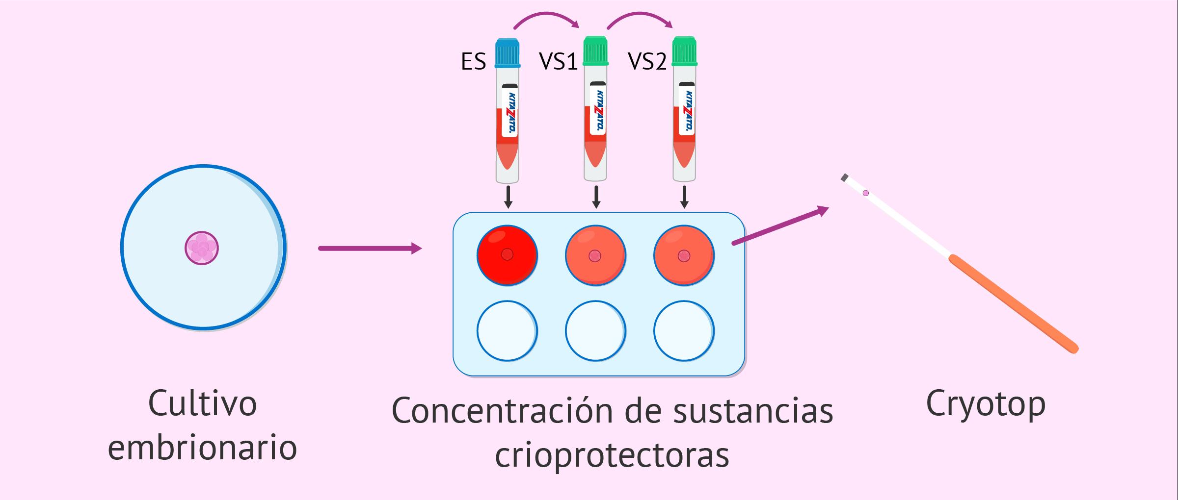 Desvitrificación embrionaria
