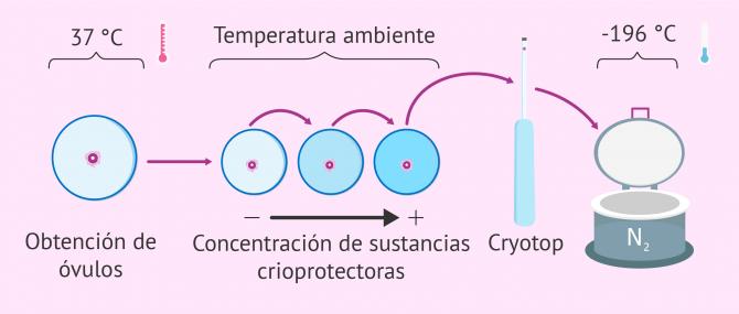 Congelación y vitrificación de gametos y embriones