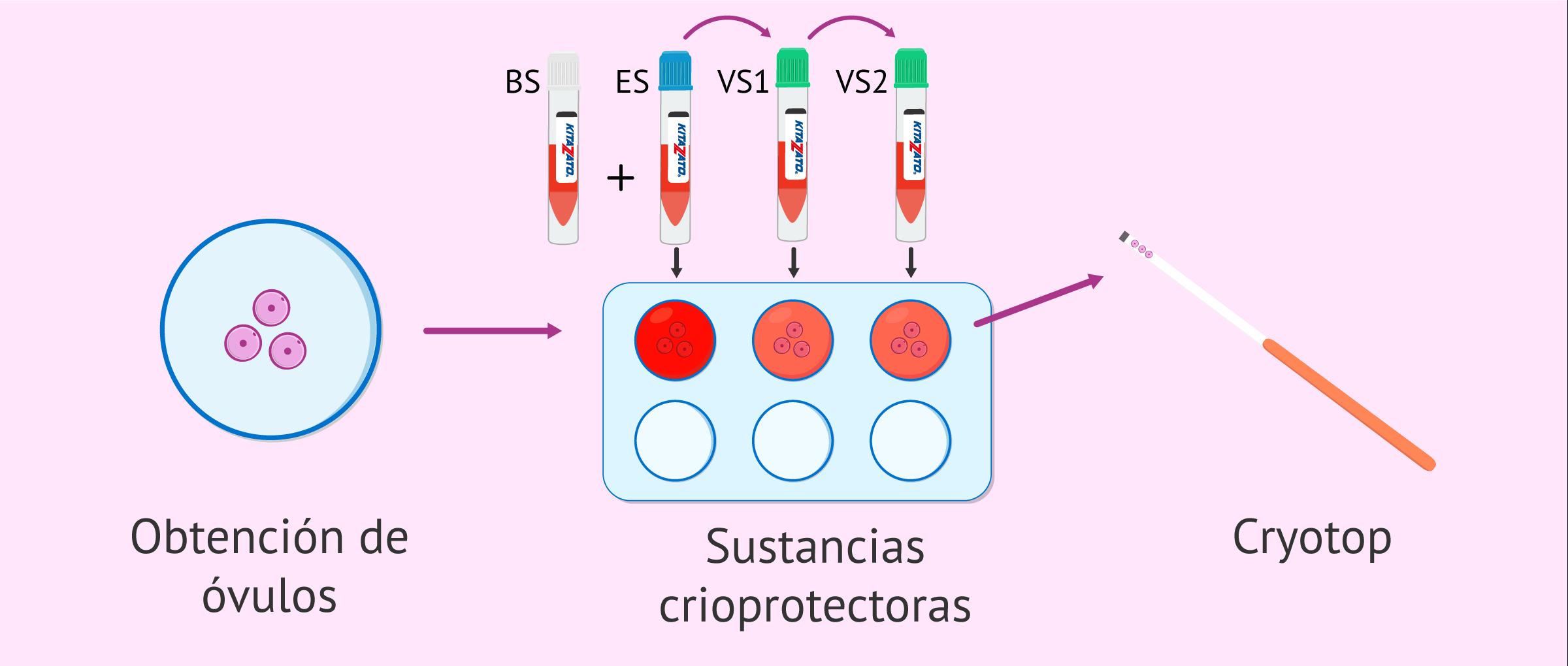 Vitrificación ovocitaria