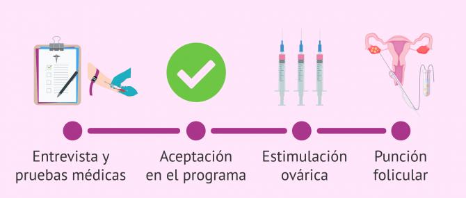 ¿Cómo se hace la donación de óvulos paso a paso?