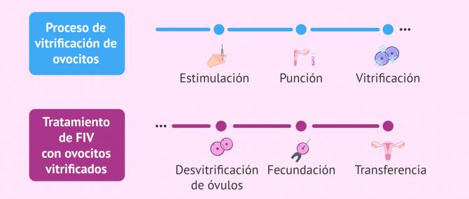 Imagen: Proceso de la FIV con óvulos congelados