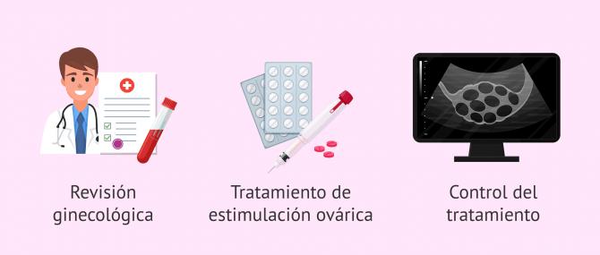 Imagen: Inicio del proceso para la preservación de la fertilidad