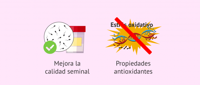 Imagen: Posibles efectos de la L-carnitina