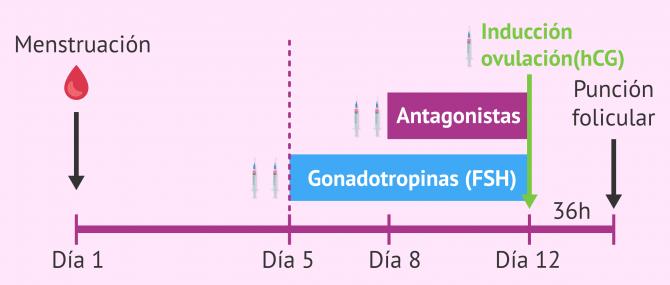 Imagen: Protocolo de estimulación ovárica en Mini-FIV