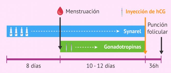 Imagen: Protocolo largo de estimulación ovárica con Synarel