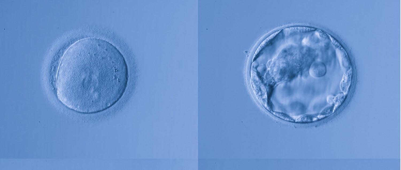 Registro embrionario