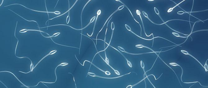 Espermatozoides artificiales