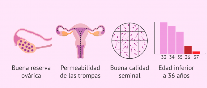 Requisitos básicos para la inseminación artificial intrauterina