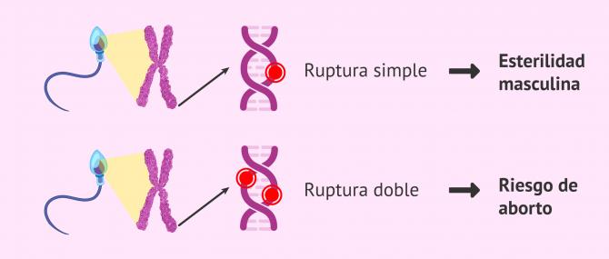 Imagen: Ruptura de la cadena de ADN espermático