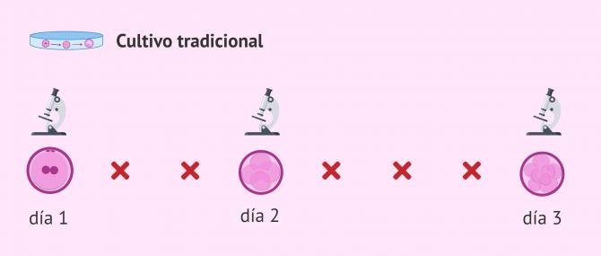 Imagen: Selección embrionaria por morfología