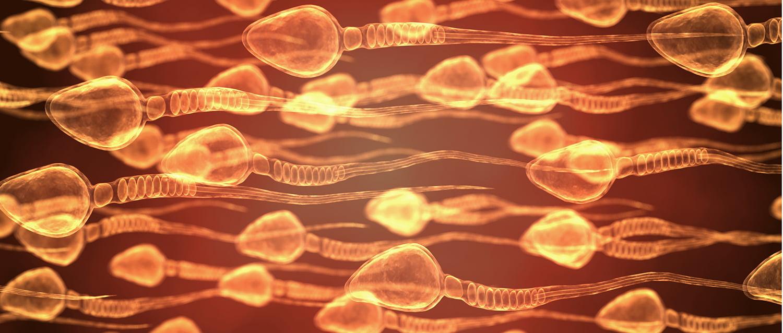 Detector de espermatozoides vivos