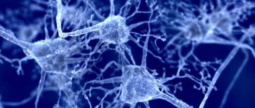 Especialmente afecta al sistema nervioso, por lo que este puede ser un signo principal de identificación.