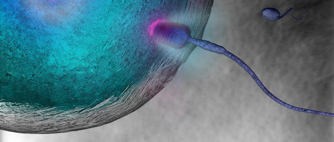 Imagen: Simulador para embriólogos