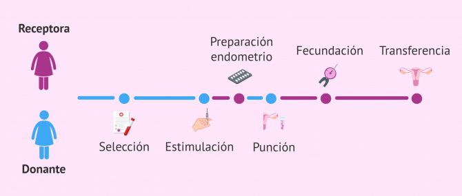 Imagen: Proceso de la FIV con donación de óvulos