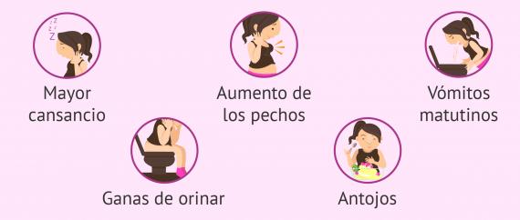 Semana 5 De Embarazo Desarrollo Del Bebe Y Sintomas En La Madre