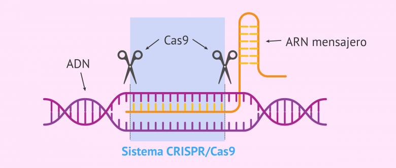 Imagen: El sistema CRISPR/Cas9