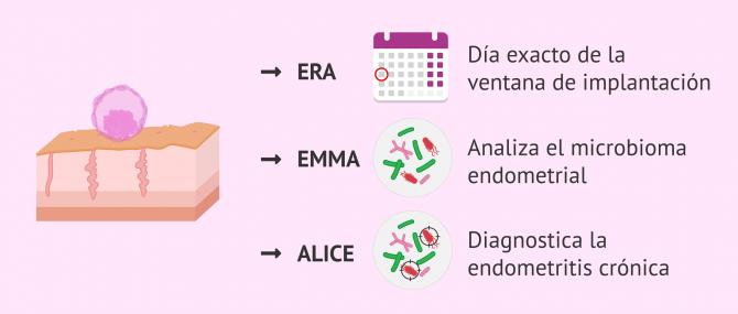 ¿Qué es el test EndomeTRIO? – Indicaciones y precio