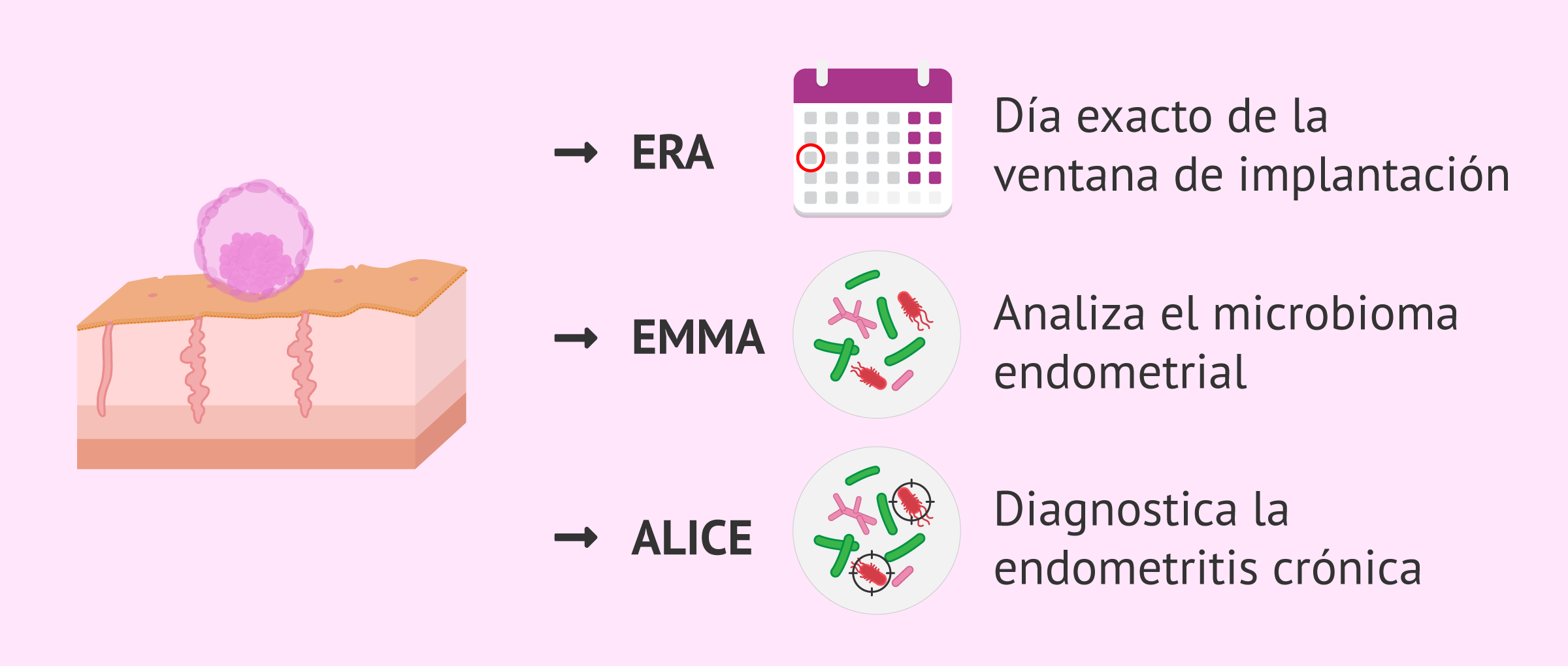 Test EndomeTRIO: ERA, EMMA y ALICE