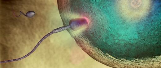 Transferencia embrionaria en las trompas de Falopio.