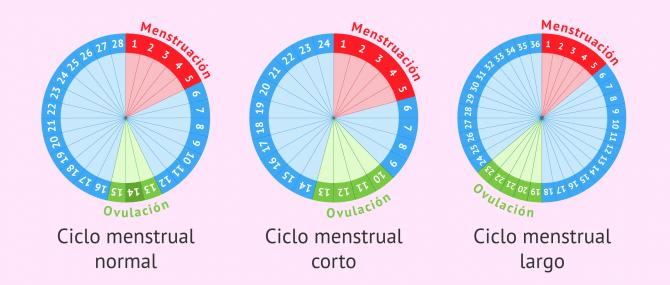 Imagen: Tipos de ciclos menstruales
