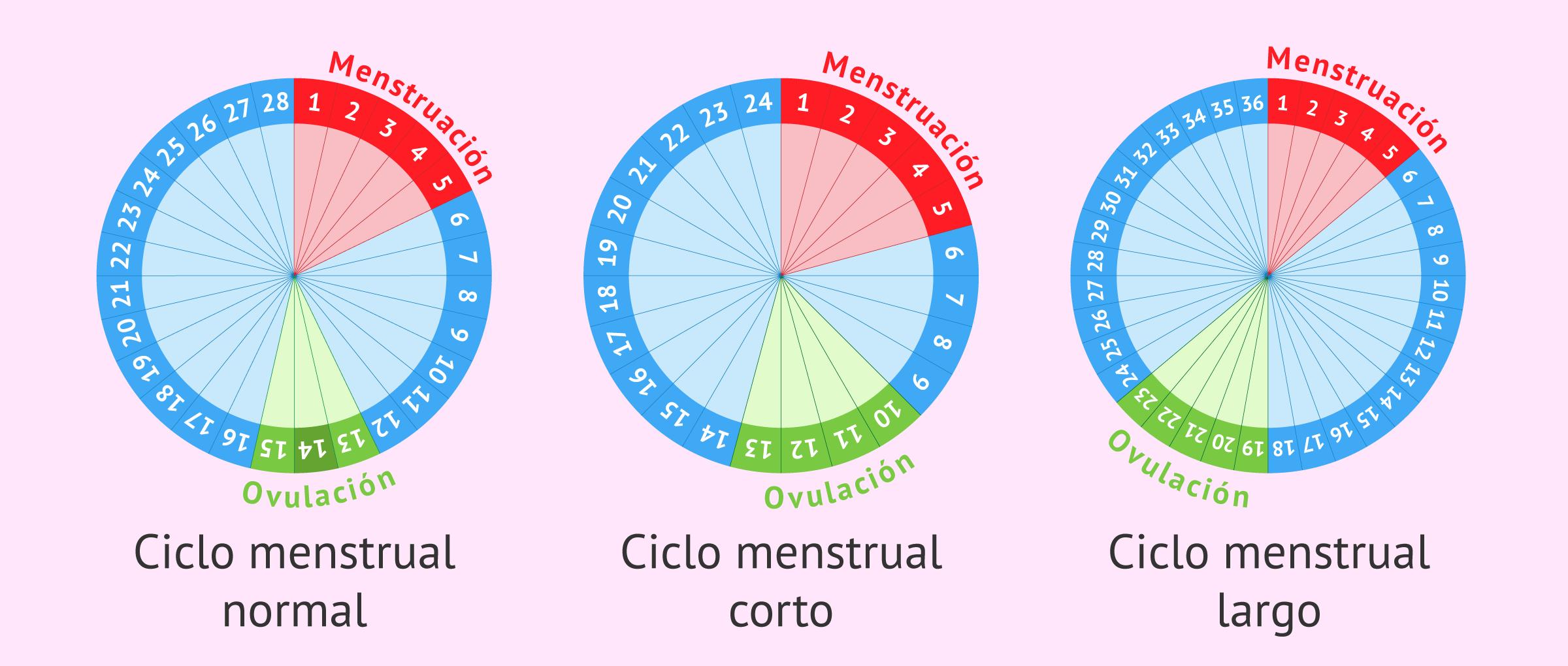 Tipos de ciclos menstruales