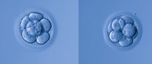 Valorar la calidad embrionaria