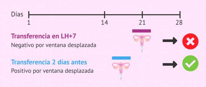 Imagen: Ventana de implantación desplazada y transferencia embrionaria