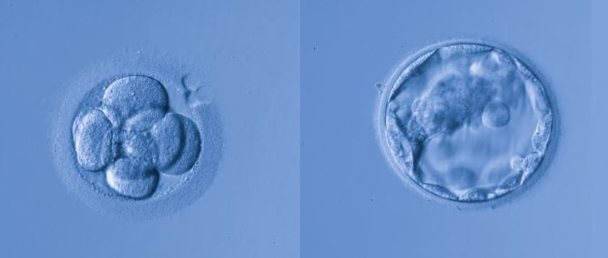 Imagen: Aplicación para ver el crecimiento del embrión