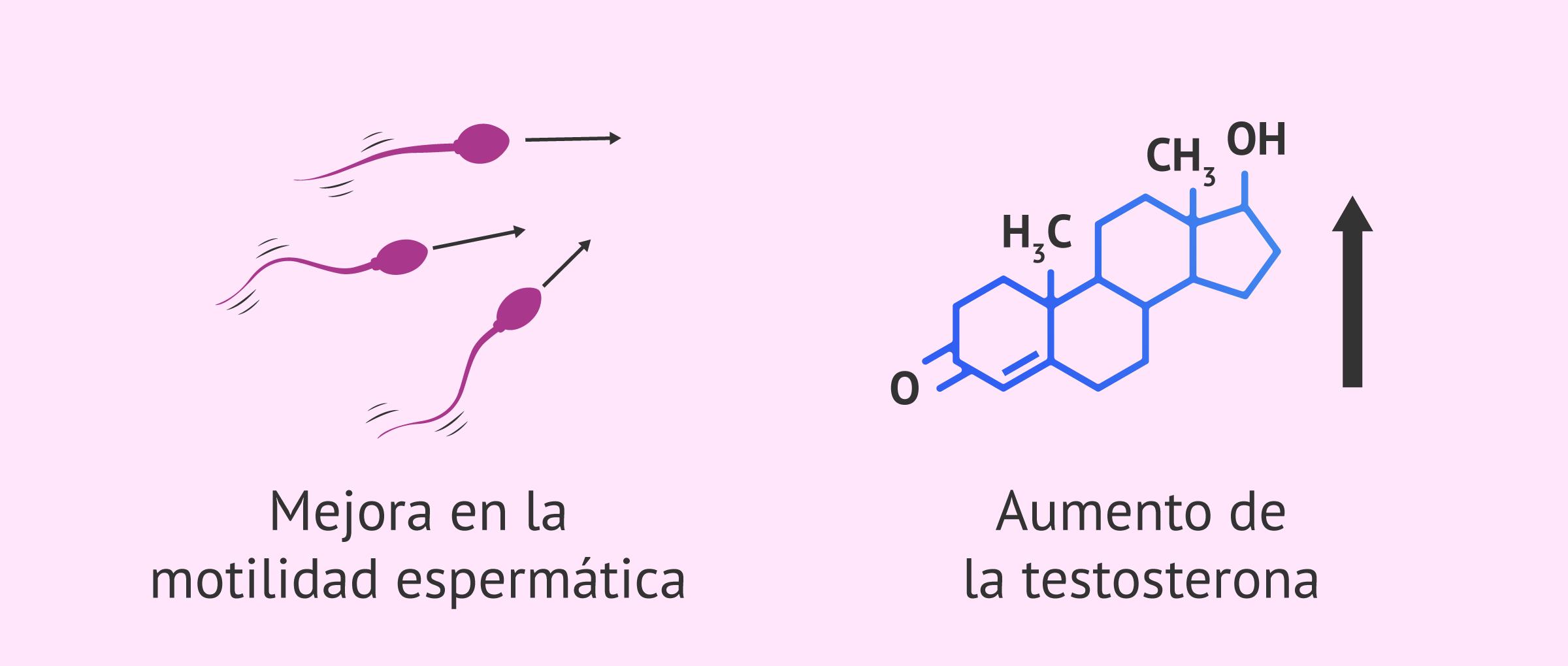 Efectos vitamina D en fertilidad masculina