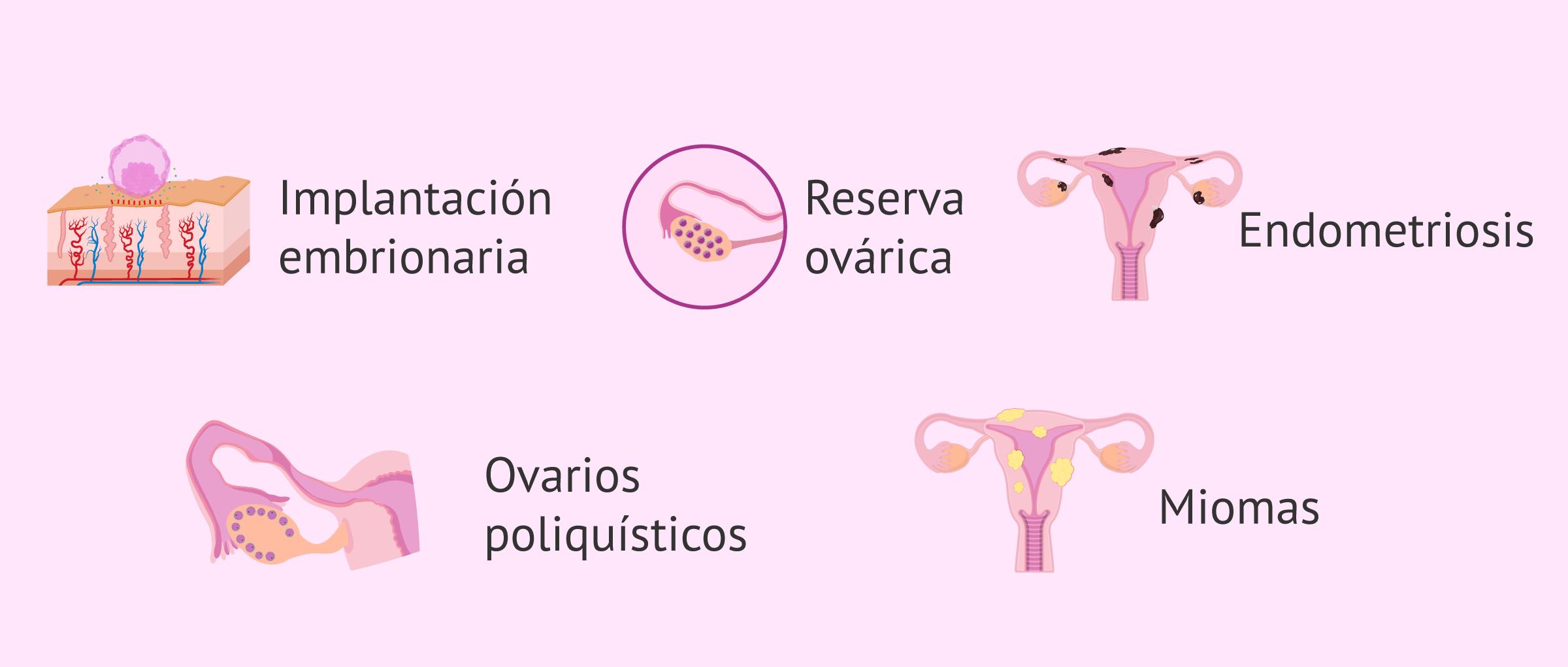 Efectos de vitamina D en fertilidad femenina