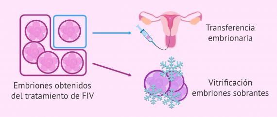Imagen: Vitrificación de embriones sobrantes