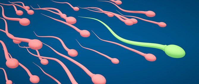 Imagen: Vulnerabilidad de los espermatozoides