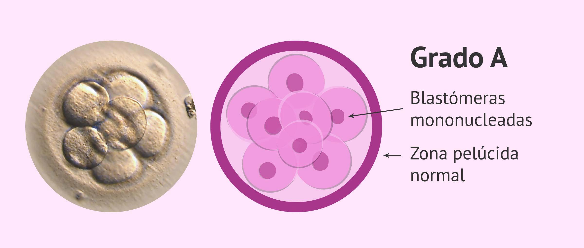 Calidad embrionaria