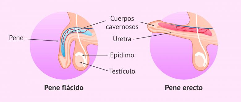 Diagrama ASL de medicamentos para la disfunción eréctil