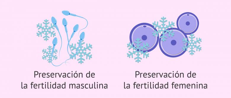 como se congela los ovulos